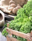 Harvested kale