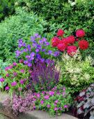 Collections Nr. 12, Geranium, Iris, Paeonia, Astilbe, Tradescantia, Salvia
