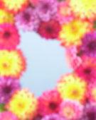 Dahlia mixed, frame