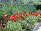 Garden sonatini's