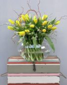 Tulipa Strong Gold