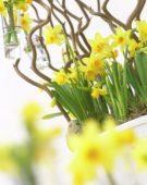 Narcissus Tete a Tete arrangement