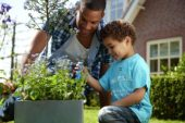 Family planting Ceanothus and Brunnera