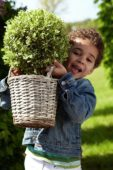 Boy holding shrub