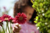 Girl touching Gerbera Garvinea