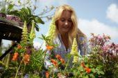Woman planting Lupinus