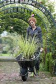 Woman with ornamental grass in wheelbarrow