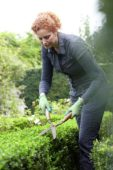 Woman cutting buxus hedge
