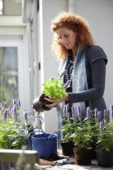 Woman planting Agastache Blue Fortune