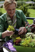 Woman planting succulents
