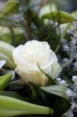 Rosa Avalanche