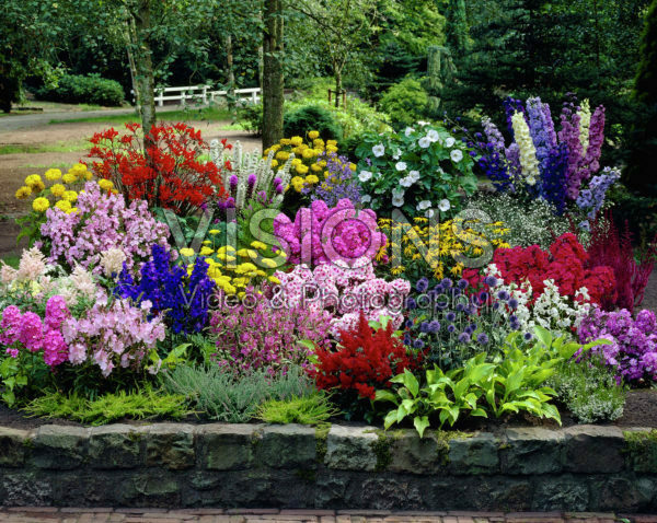 Collection, Hosta, Physostegia, Hibiscus,  Echinops,  Crocosmia, Lupinus, Delphinium, Phlox, Astilbe, Scabiosa, Achillea