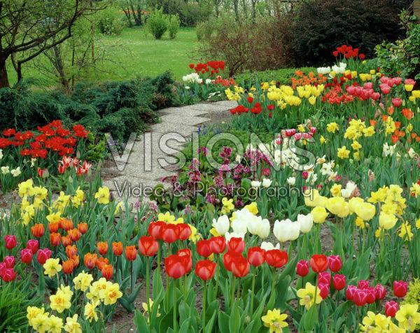 Tulipa, Narcissus, Bergenia