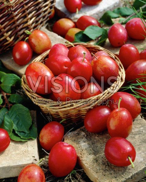 Prunus domestica Victoria