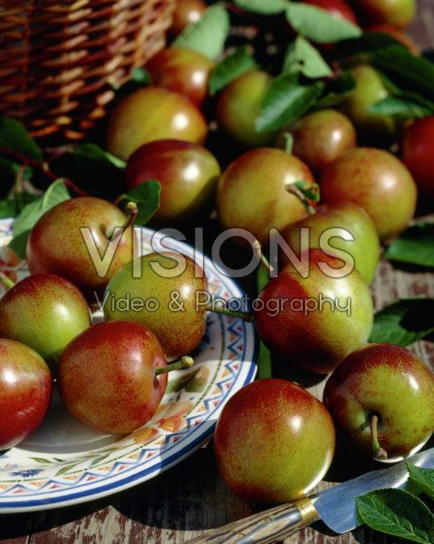 Prunus domestica Reine Claude d'Althan