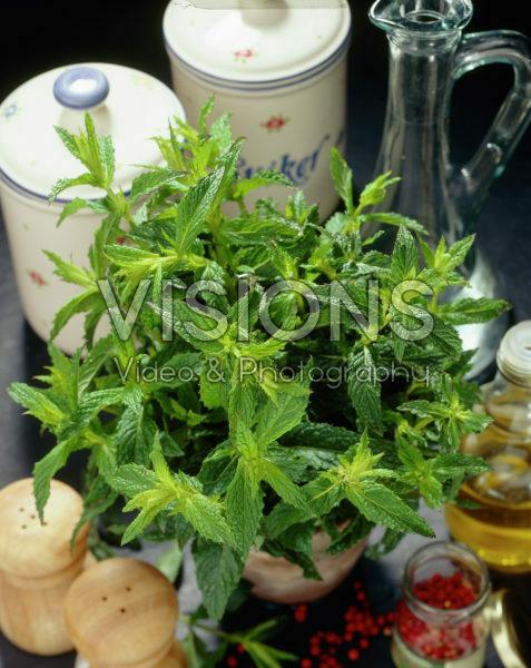 Mentha citrata