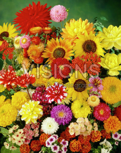 Mixed flowers, Dahlia, Helianthus, Phlox, Tagetes