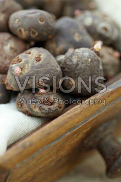 Geranium tuberosum bulbs