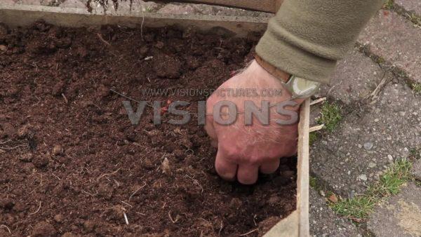 VIDEO Planting Begonia