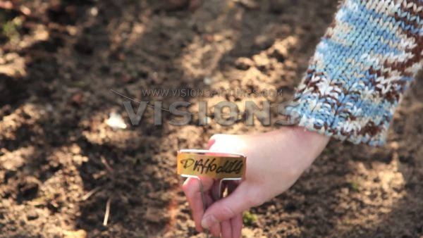 VIDEO Planting flower bulbs