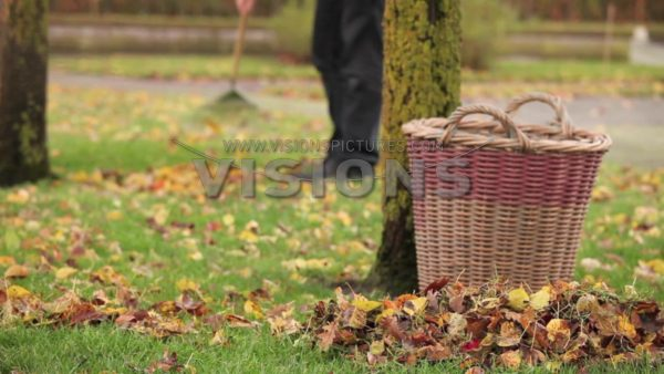 VIDEO Raking leaves