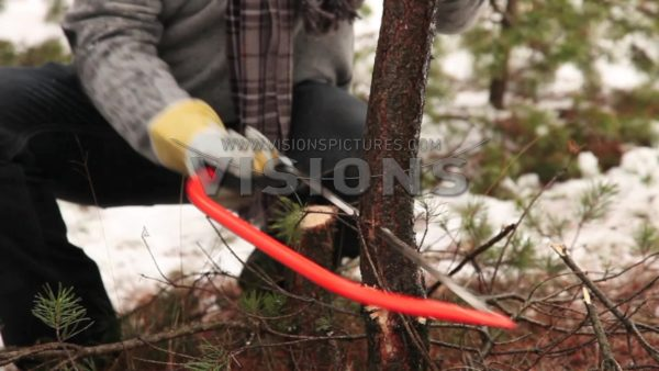 VIDEO Cutting christmas tree