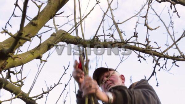 VIDEO Pruning apple tree