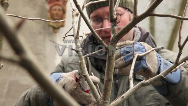 VIDEO Pruning Malus