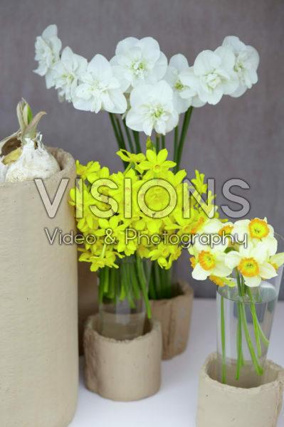 Narcissus in vase