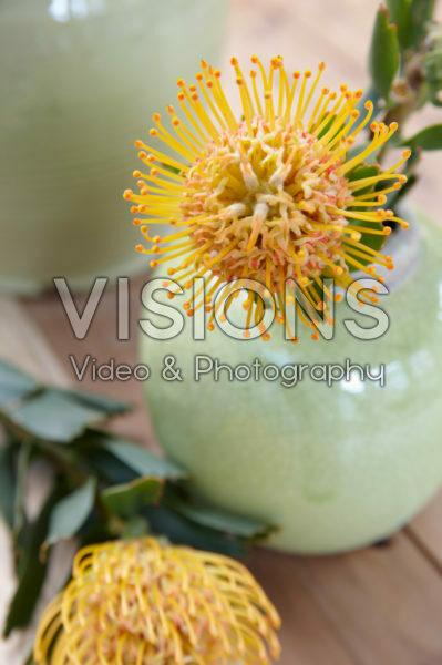 Leucospermum in vase