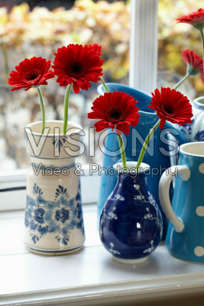 Gerbera in vases