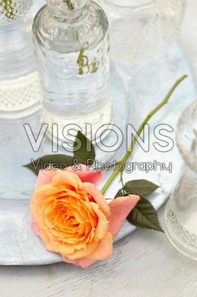 Rosa orange