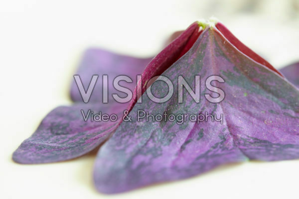 Yka Leaves ®