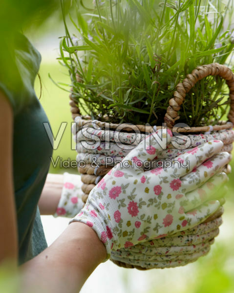 Lady holding basket with lavender