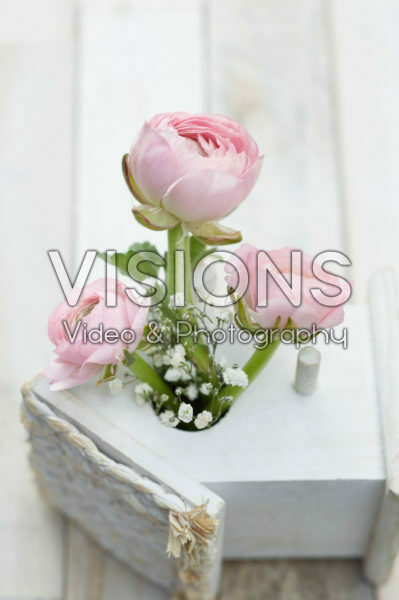Ranunculus Pink, Gypsophila