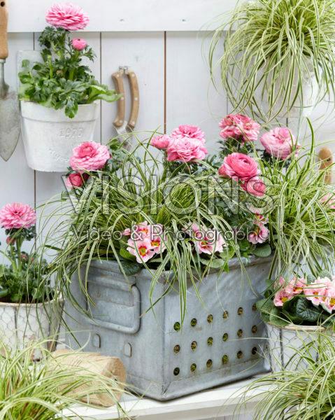 Carex EverColor® Evercream