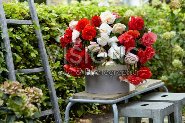 Begonia Cascade® Odorosa® White Blush, Red Sunset and Sweet Pink