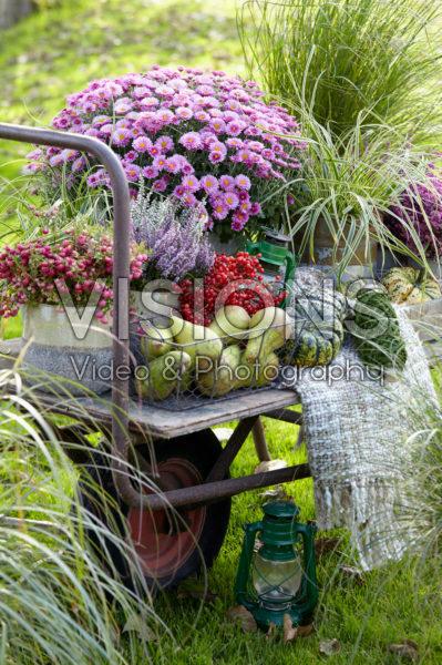 Summer collection on wheelbarrow
