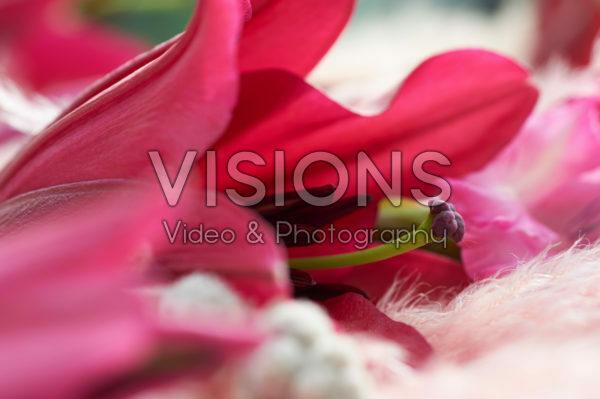 Still life lily