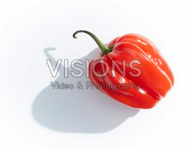 Capsicum chinense Adjuma