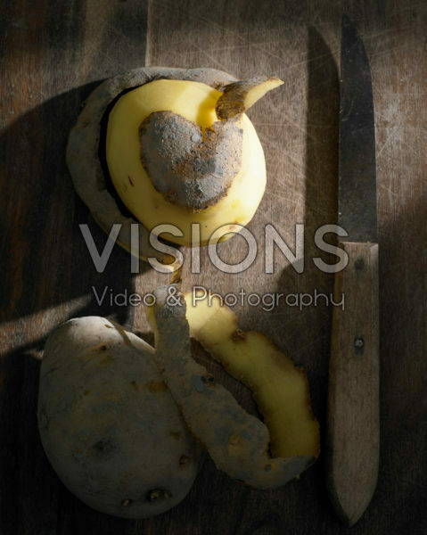 Solanum tuberosum Frieslander