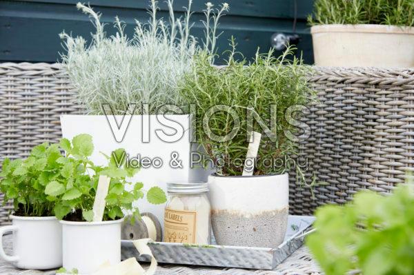 Herbs on pot