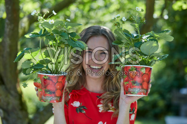 Lady holding straberry plants