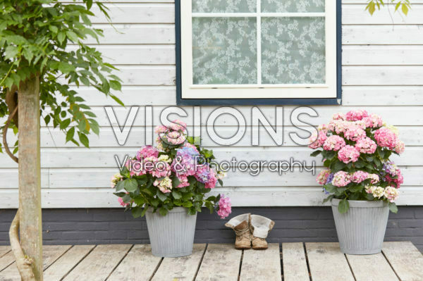 Hydrangeas on patio