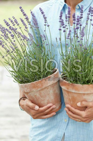 Lady holding lavender
