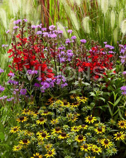 Mixed perennials