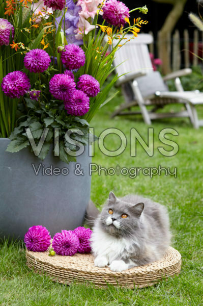 Cat beside summer container