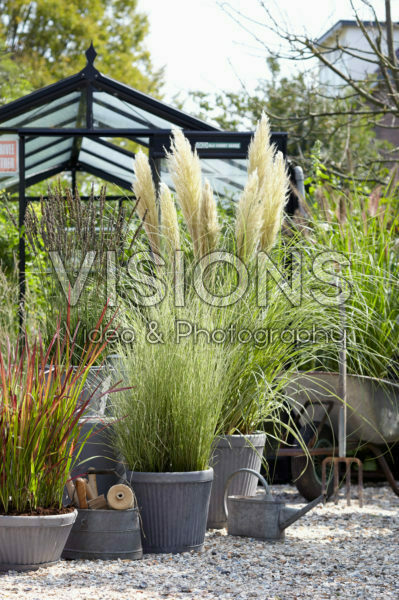 Ornamental grass collection