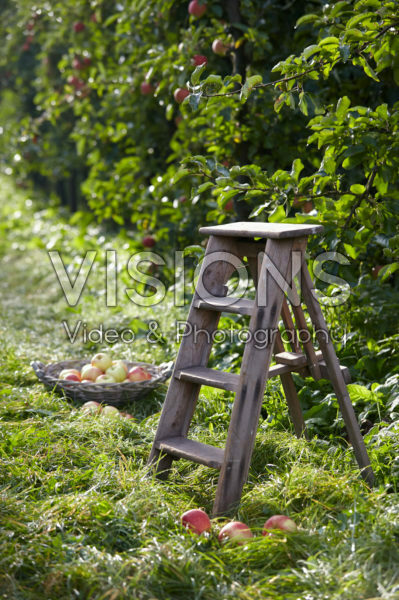 Picking fruit in orchard