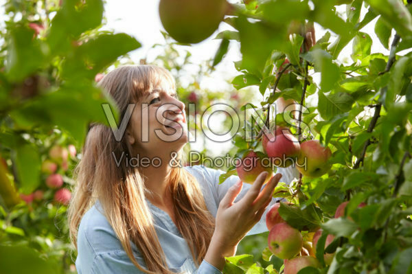 Young lady picking apples